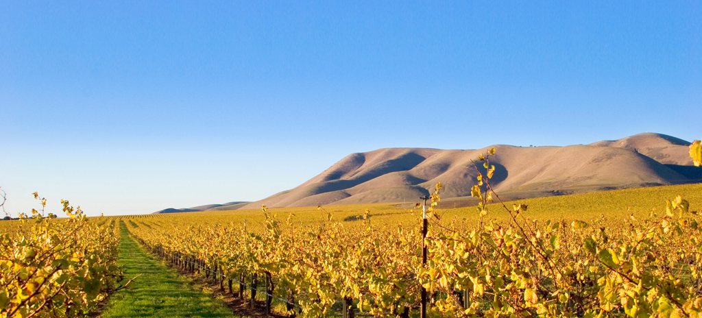 The rolling hills of St. Ynez.  Have an early breakfast as you watch the fog roll in over the vineyard.