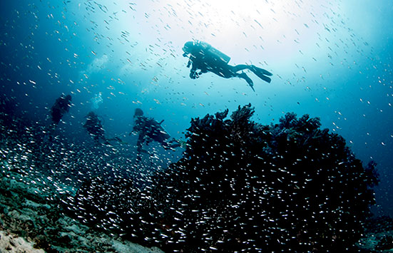 Cozumel vacation packages funjet vacations - Cozumel dive packages ...