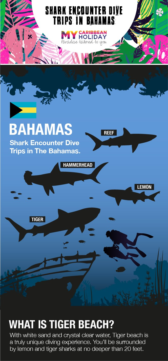 Shark encounter dive trips in the Bahamas