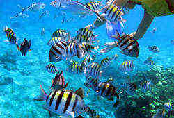 Explore Aruba's Underwater world