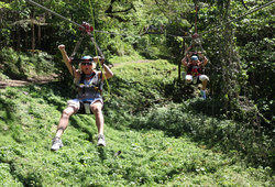 Zip Lining at Wingfield Estate, St Kitts